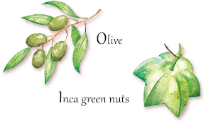 Olive Inca green nuts